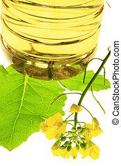 植物, napus), (brassica, canola