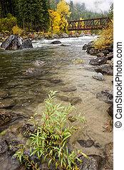 植物, river.