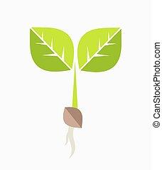 植物, seedling.