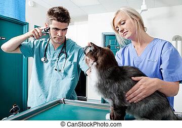 検査, 医者, 獣医, 若い, ねこ