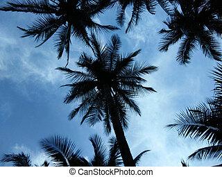 椰子樹, 針對, 藍色的天空