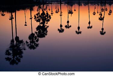 椰子, 反映, 树, 领域, 手掌, 日出