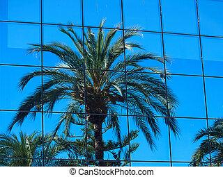 椰子, 反映, 窗口, 树, 玻璃, 手掌