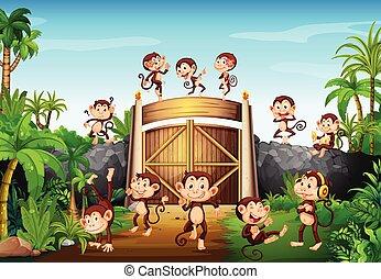楽しみ, 門, 持つこと, 猿