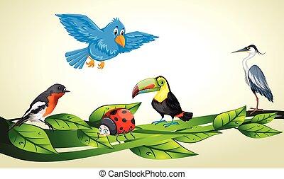 楽しむ, 遊び, 鳥, 木