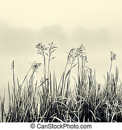 概念, シルエット, -, 杖, 黒, 霧, minimalism, 白