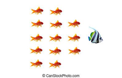 概念, ビジネス, diffrent, 背景, 金魚, 白, 独特, リーダー
