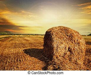 概念, 収穫