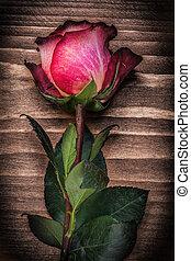 概念, 拡大された, バラのつぼみ, ホリデー, 木, 板, 赤