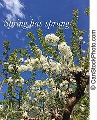 概念, 春, 持つ, image., sprung.