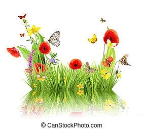 概念, 牧草地, 反射。, 春, 隔離された, 水, 背景, 白