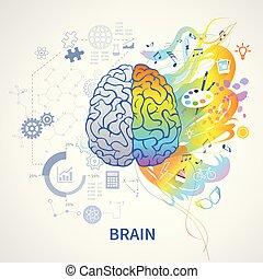 概念, 脳, 左, 権利