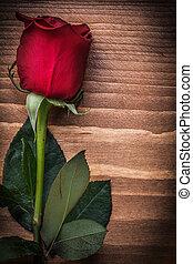 概念, 自然, バラ, 拡大された, ホリデー, 木, 板, 赤