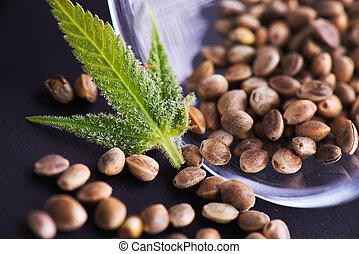 概念, 葉, インド大麻, 医学, trichomes, -, マリファナ, ごく小さい, 目に見える, 種, (...