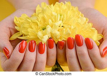 構成, 黄色, 色, 爪, gerberas., 美しい, 赤, 鮮やか