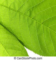 構造, の, a, 緑の葉