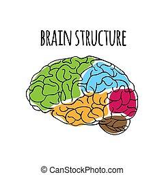 構造, イラスト, システム, 神経質, 薬, ベクトル, 脳