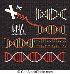 構造, dna, 遺伝学