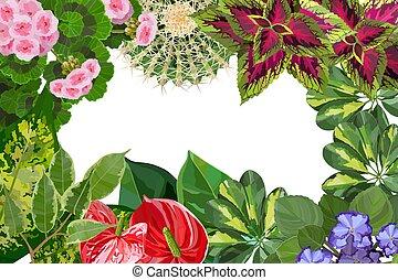 様々, タイプ, の, houseplant, 花, 背景, 平面図