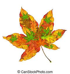 槭樹葉, 概念
