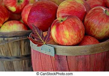 槭樹葉, 由于, 秋天, 蘋果