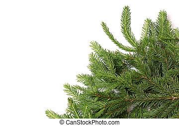 樅樹, 分支, 樹, 被隔离, 背景, 白色, 聖誕節