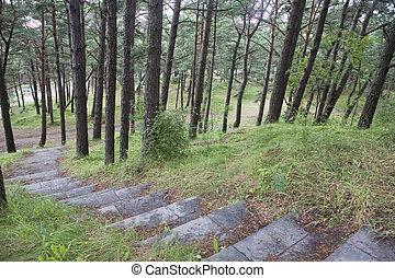 樓梯, 在, 松樹