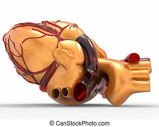 模型, ......的, 人工, 人的 心臟, 3d, rendering