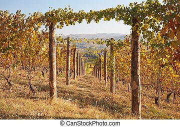 横列, ポイント, 木製である, 秋, つる, 日, ブドウ園, 消失, ポーランド人, 日当たりが良い