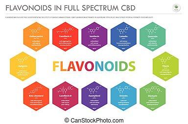 横, infographic, フォーミュラ, ビジネス, フルである, 構造, cbd, スペクトル, flavonoids