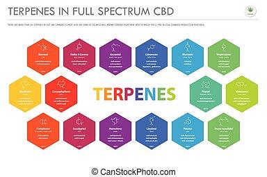 横, infographic, フォーミュラ, ビジネス, フルである, 構造, terpenes, cbd, スペクトル