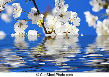 樱桃, 反映, 花