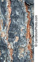 樹皮, 手ざわり, 松