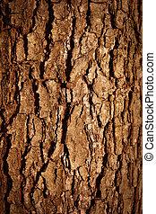 樹皮, 木