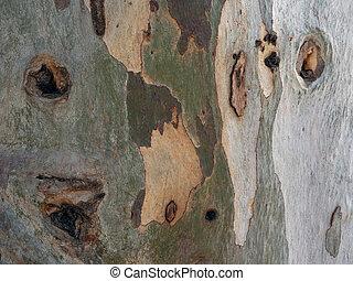 樹皮, 木。, 古い