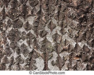 樹皮, 木, 手ざわり, シラカバ