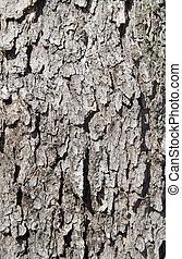 樹皮, 背景, 木