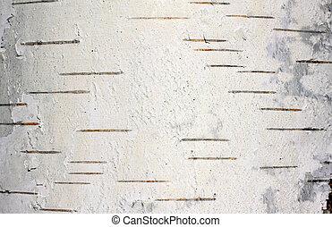 樹皮, 自然, 手ざわり, シラカバ