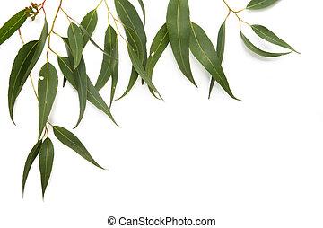 樹膠, 葉子, 邊框