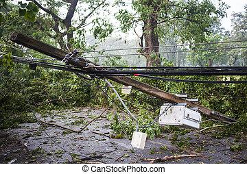 樹, 下來, 在, 風, 損害