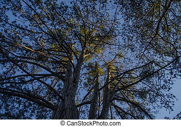樹, 以及藍色, 天空