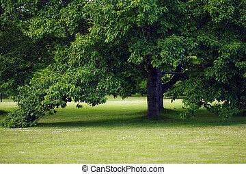 樹, 公園