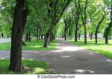 樹, 公園, 綠色, 很多, 美麗