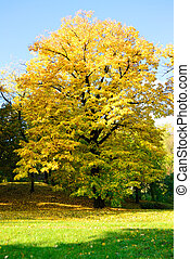 樹, 公園, 黃色