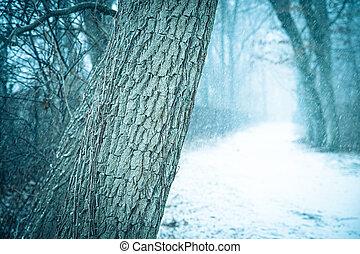 樹, 冬天