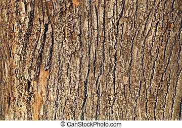 樹, 咳嗽聲, 橡木