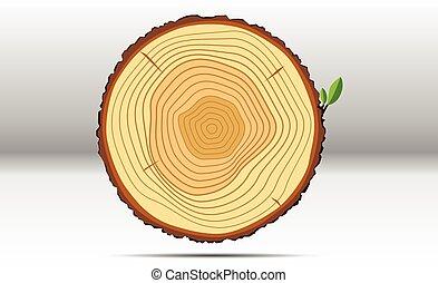 樹, 增長圓環, 木頭