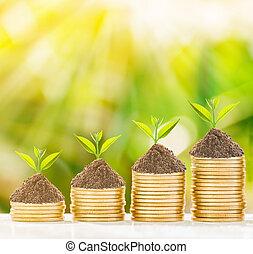 樹, 成長, 上, 硬幣