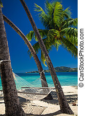 樹, 熱帶, 吊床, 棕櫚, 在之間, 海灘, 空