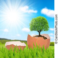 樹, 生長, 在, a, egg.